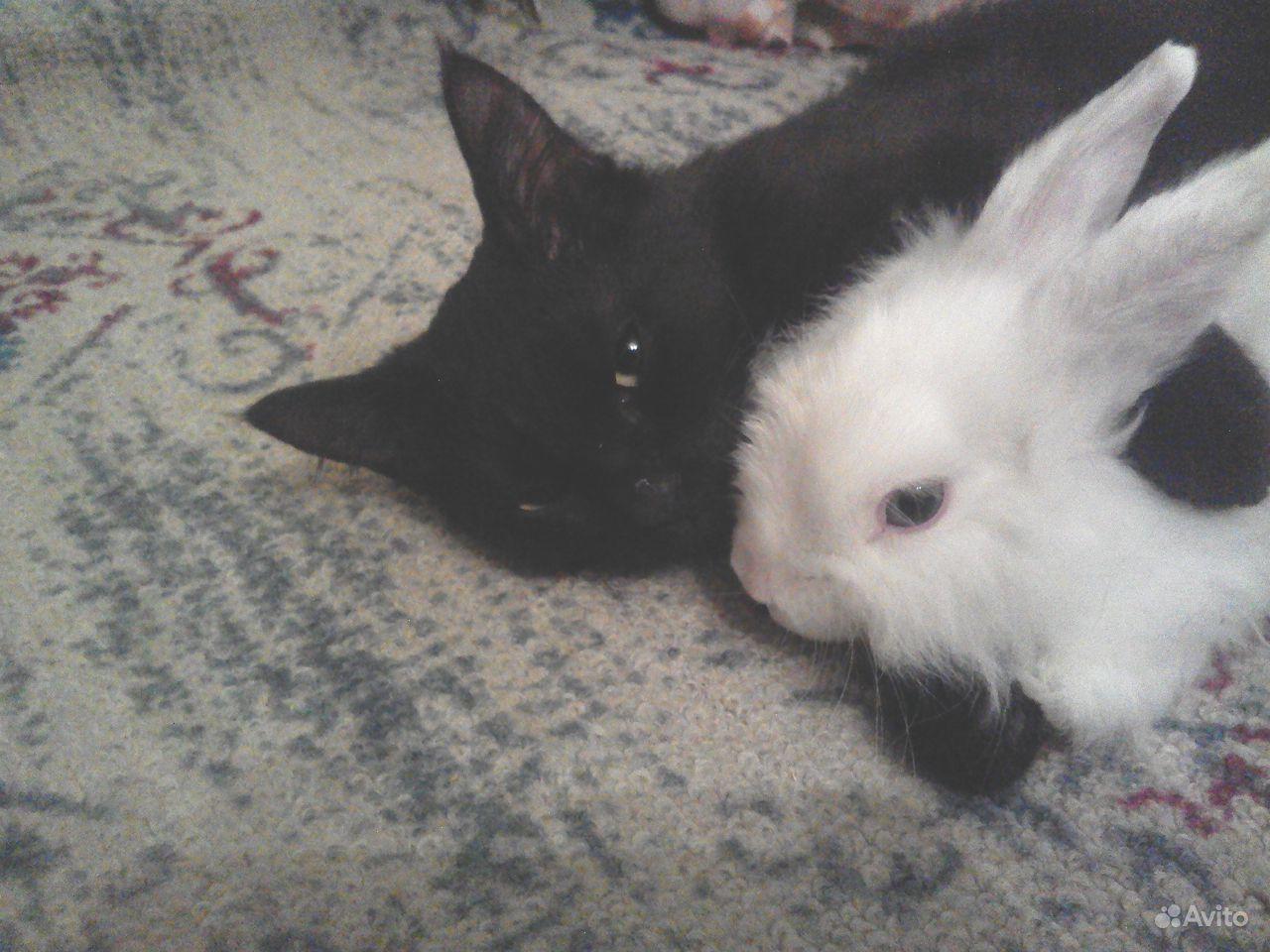 Кролик декоративный белый с клеткой