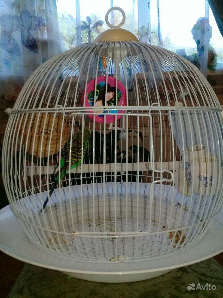 Попугай в месте с клеткой
