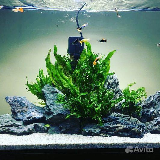 Дизайн аквариума купить на Зозу.ру - фотография № 1