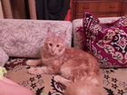 Вязка за котенка