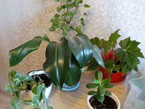 Комнатные растения — Растения в Магнитогорске
