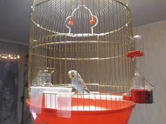 Волнистый попугай с клеткой и купальней