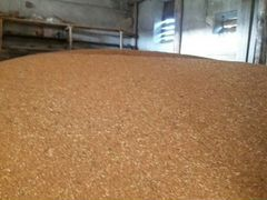 Пшеница 2020 года