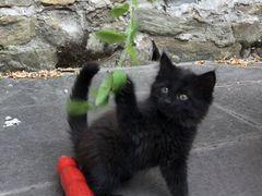 Котёнок девочка 1.5 мес