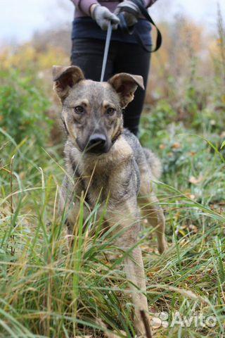 Отдам собаку Смайлика купить на Зозу.ру - фотография № 1