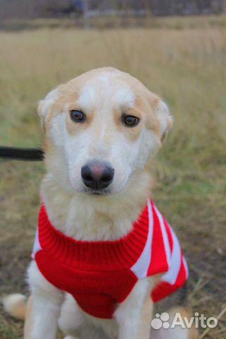 Милашка Собака подросток Эви в дар купить на Зозу.ру - фотография № 2