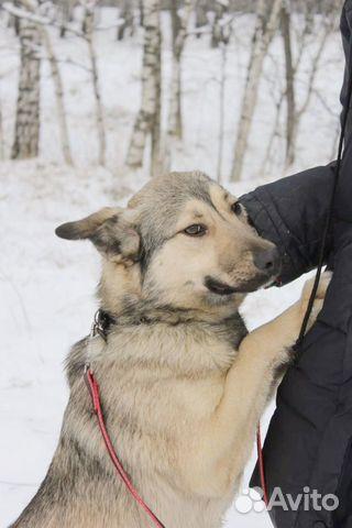 Чудесный малыш для семьи в добрые руки купить на Зозу.ру - фотография № 7