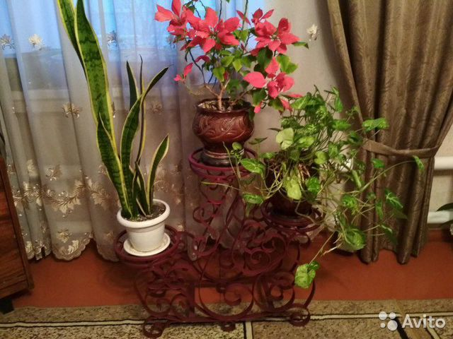 Подставка для цветочных горшков 89913784997 купить 4