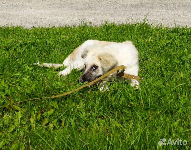 Собака в добрые руки  89133800136 купить 2
