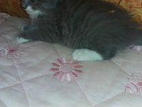 Котята от трехцветной кошки