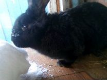 Кролы