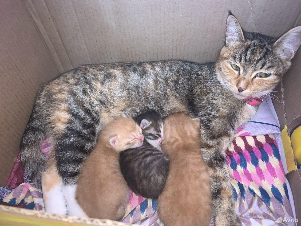 Котята в добрые руки  89243072853 купить 1