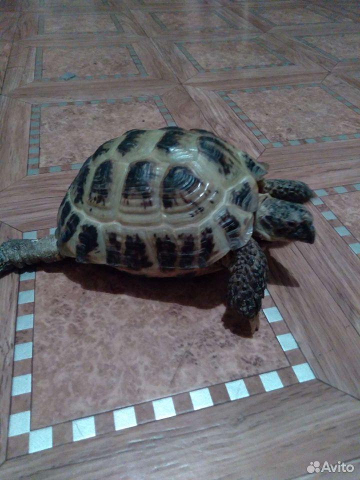Turtle mark  89235003060 köp 1