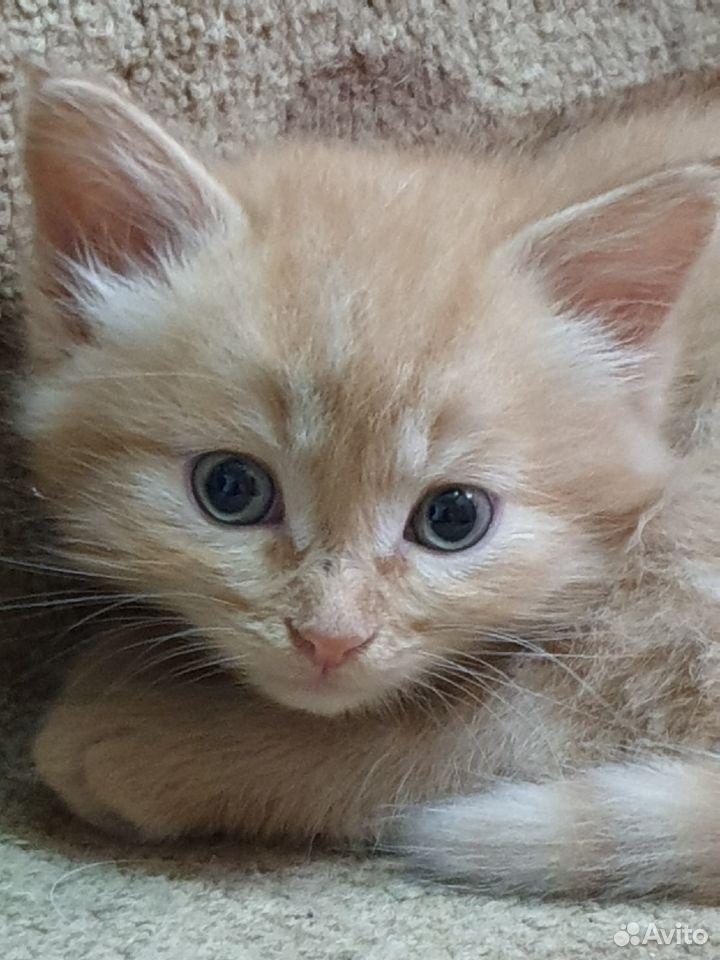Кошка  89876768416 купить 5