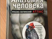 Анатомия человека русско латинский