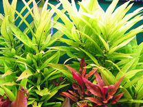Аква растения