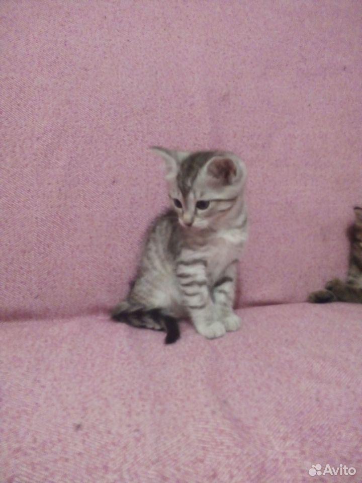 Отдам котят  89125546532 купить 1