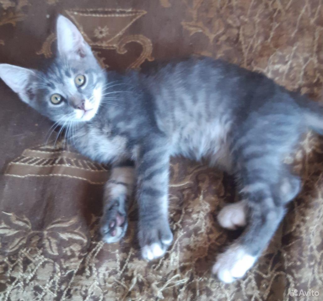 Котята две сестры и братик  89107128313 купить 2